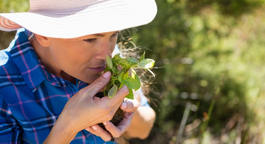 Woman smelling her cannabis plants in garden. what are terpenes and why are they important to weed?