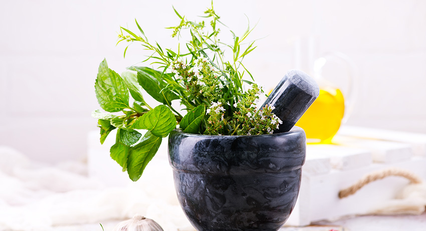 aroma herb and spice plant. what are plant terpenes. weed store delivery in scarborough toronto.