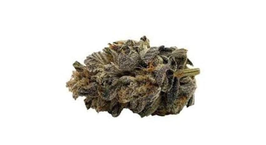 gelato weed with terpenes. buy legal weed scarborough dispensary