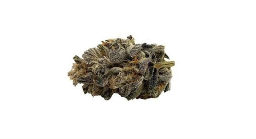 trichromes and terpenes in marijuana cannabis. buy legal weed in scarborough.