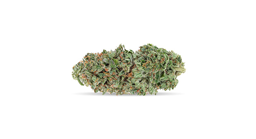 Image of pink kush weed strain available at Stok'd Scarborough cannabis dispensary with delivery. what indica strain best for pain?